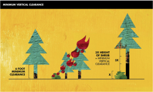 minimum vertical clearance of trees and shrubs to defend against wildfires